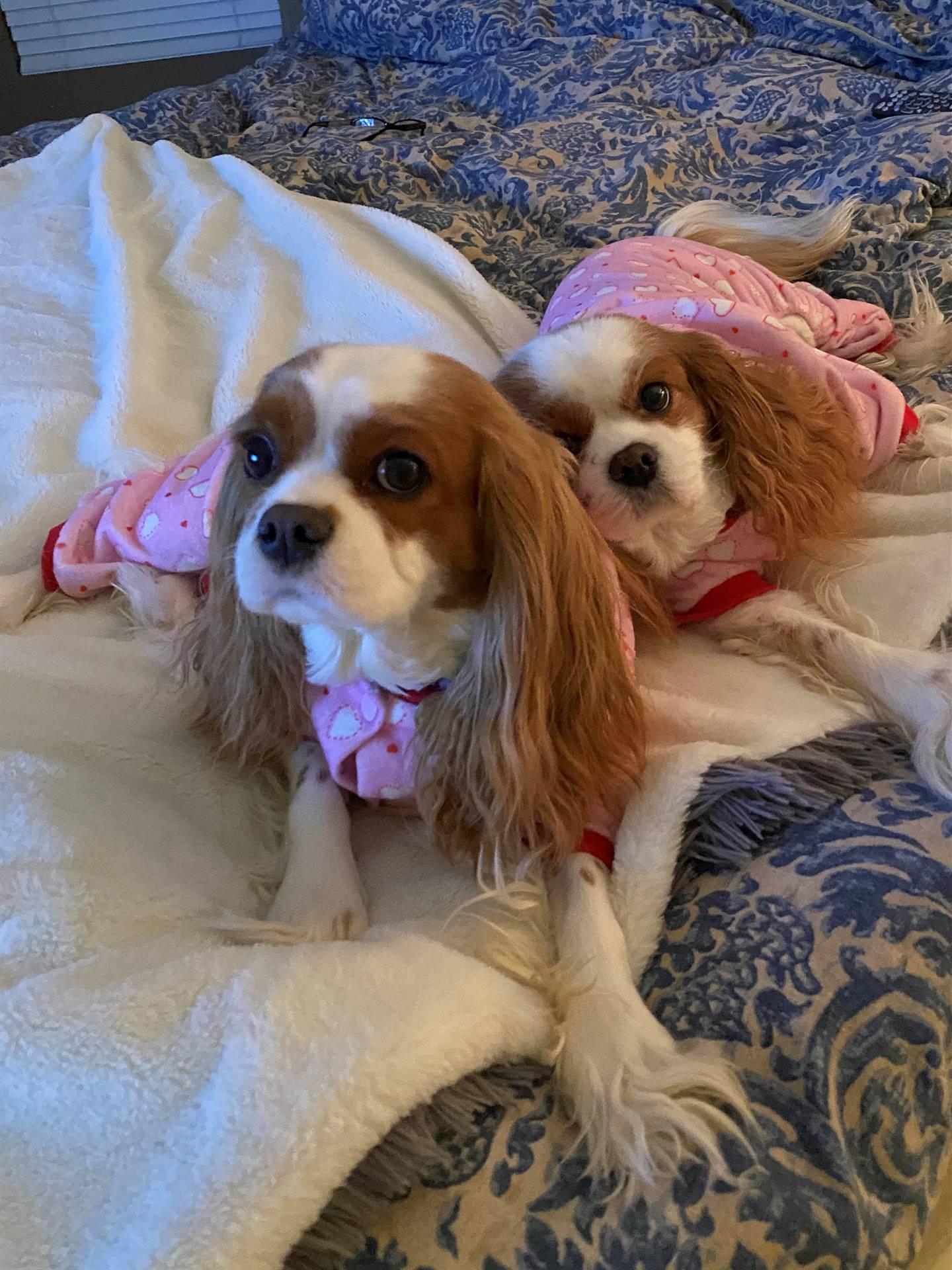 Mrs. Artino's pups